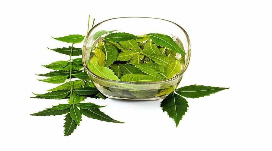 obat herbal untuk jerawat