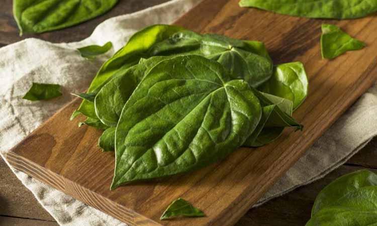 evamulia clinic - manfaat daun sirih untuk wajah