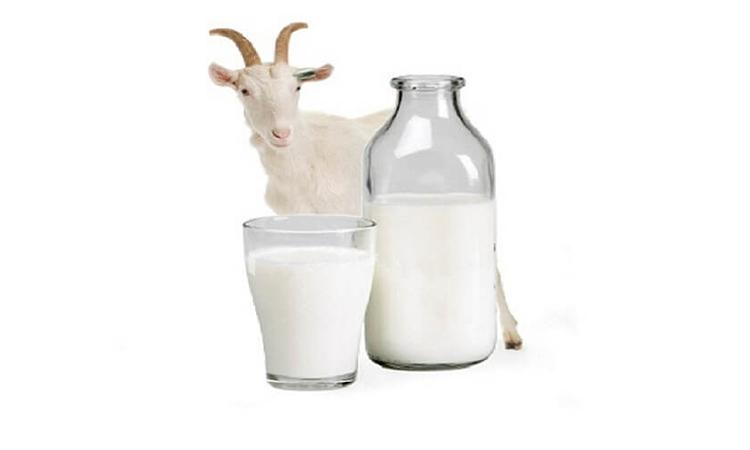 Dr. Eva mulia - manfaat susu kambing