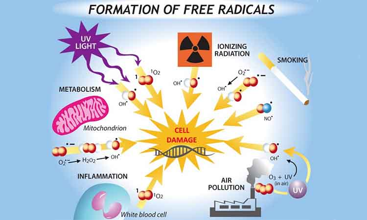 Eva Mulia Clinic - radikal bebas