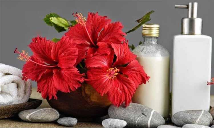 Eva Mulia - bunga hibiscus untuk kecantikan