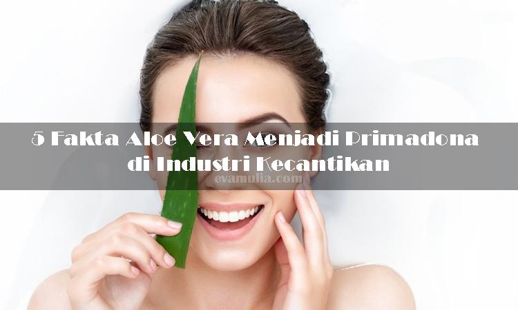 Evamulia - 5 Fakta Aloe Vera Menjadi Primadona di Industri Kecantikan - Sebagai negara dengan iklim tropis, Indonesia memiliki berbagai jenis