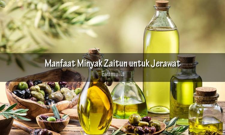Evamulia - manfaat minyak zaitun - manfaat minyak zaitun untuk kulit - manfaat minyak zaitun untuk jerawat - Minyak zaitun adalah minyak yang didapatkan dari hasil penggilingan tanaman zaitun