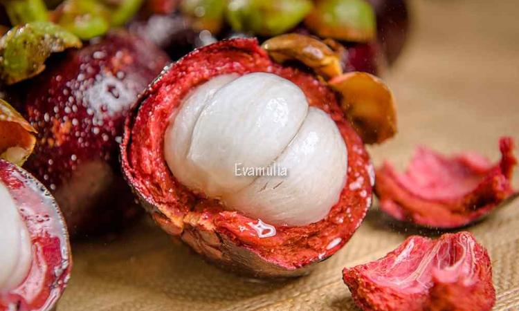 Klinik evamulia - manfaat kulit manggis untuk kulit - kulit manggis untuk kecantikan - Mungkin kalian sudah tidak asing lagi dengan buah manggis. Selain mempunyai rasa yang enak