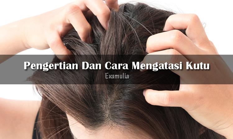 Eva Mulia - Klinik Eva Mulia - cara mengatasi kutu rambut - tips perawatan rambut - tips kecantikan - klinik kecantikan - Penyebaran kutu rambut paling cepat terjadi pada anak-anak, akan tetapi