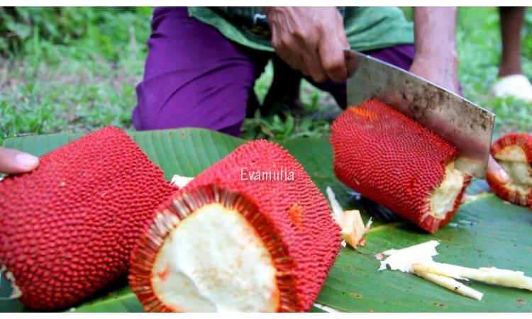 Eva Mulia - Klinik Evamulia - Prawatan Wajah - Manfaat Buah Merah Dari Papua Untuk Kesehatan - Buah Merah Papua adalah buah berwarna merah yang berasal dari papua dan diyakini memiliki banyak manfaat yang terkandung didalamnya. Apakah kalian pernah mendengar tentang buah ini? Atau kah anda sudah pernah mencobanya?