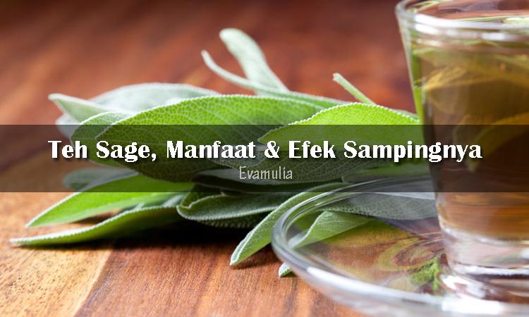 Eva Mulia - Klinik Evamulia - Perawatan Wajah - Teh Sage - Manfaat Teh Sage - Efek Samping Teh sage - Sage memang dikenal sebagai penyedap makanan. Akan tetapi, daun dan bunganya sering digunakan untuk teh sebagai obat herbal.
