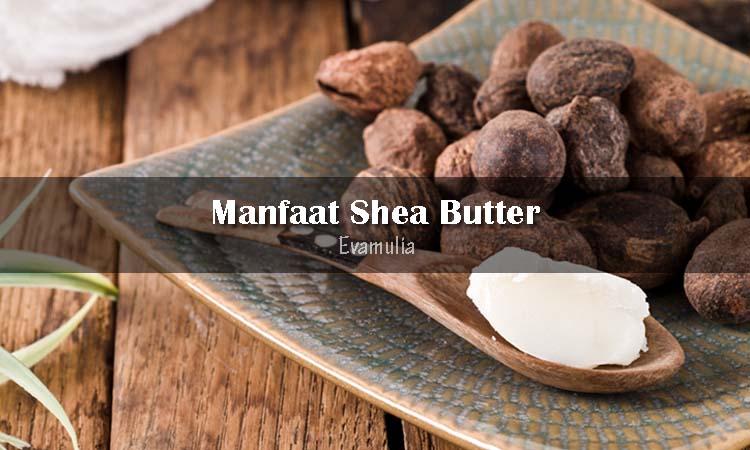 Eva Mulia - Perawatan Wajah - Manfaat Shea Butter Untuk Kulit - Shea butter adalah lemak alami yang diekstrak dari kacang pohon shea yang tumbuh disabana Afrika. Nutrisi yang ada didalamnya memiliki manfaat untuk keshatan kulit dan rambut, bisa digunakan sebagai tabir surya hingga ketombe.